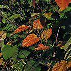 Chokeberry Potpourri by RVogler