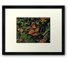 Chokeberry Potpourri Framed Print