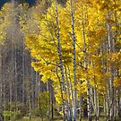Glorious Autumn Light by lorilee