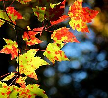 Spotty Colour At Best by Kathleen Daley