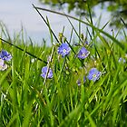 Spring Flowers  by James  Key