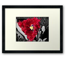 Is that really a tulip? Framed Print
