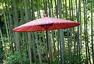 Japanese Umbrella among the Bamboo by Mui-Ling Teh