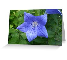 Blue Star of Day Greeting Card
