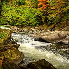 The Beauty Of Fall by Kathy Baccari