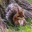 Hurry Up and Take the Photo... I Have Nuts to Gather! by heatherfriedman