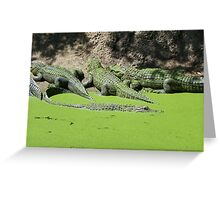 Gator Gathering Greeting Card