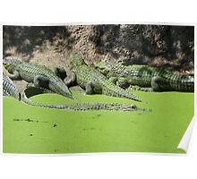 Gator Gathering Poster