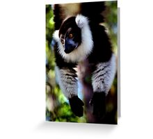 Back & White Ruffed Lemur Just Hanging Around, Madagascar  Greeting Card