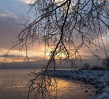 A Curtain of Frozen Branches - Ice Storm Sunrise by Georgia Mizuleva