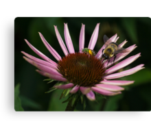 It's Getting Crowded on This Flower Canvas Print