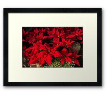 Happy Scarlet Poinsettias Christmas Star Framed Print