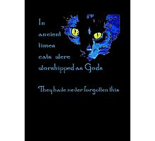 Cats Never Forget  Photographic Print