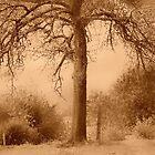 Artscape.......Tree in Sepia........... by Imi Koetz