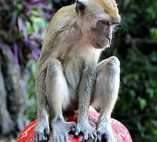 Contemplative Monkey - Batu Caves, Malaysia. by Tiffany Lenoir