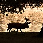 Red Deer Silhouette by Ashley Beolens