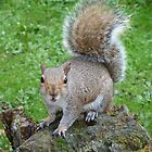 Furious Squirrel by Sandra Caven