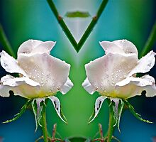 Twins by Carolyn Clark