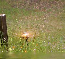 Lighting the Way by randymir