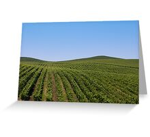 Rolling Vineyards Greeting Card