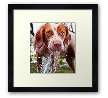Dogs with game face on .43 Framed Print