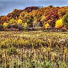 Fall Colors I by Roger Passman