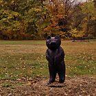 A bear in the yard by vigor