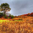 Fall Colors II by Roger Passman