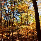 The Forest in Fall by Kadwell