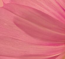Pink Cosmo Petals Macro  by Sandra Foster