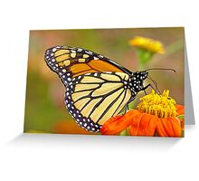 Monarch Of The Flowers Greeting Card