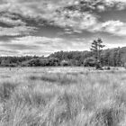 Florida Sawgrass Prairie  by GeorgeBuxbaum