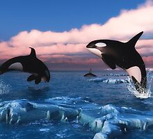 Killer Whales In The Arctic Ocean by Gatterwe