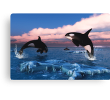 Killer Whales In The Arctic Ocean Canvas Print