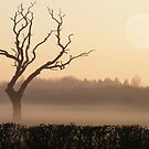 LONESOME Old Tree in a Winter Sunset by AnnDixon