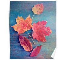 Autumn Leaves on Blue Vintage Table 2 Poster