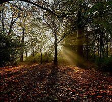 Preston Park, Misty Morning by Dave Hudspeth
