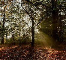 Misty Morning in Preston Park by Dave Hudspeth