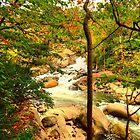 Fall River Running by Kathy Baccari