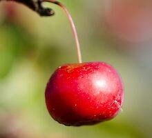 Just apple by Giiabubble