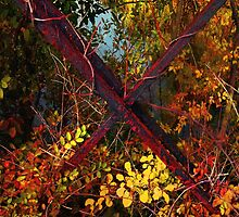 Autumn's Bandolier by RC deWinter