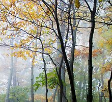 Fall Mist by Jay-J