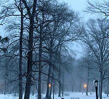 Snowy picnic at Pelham Bay Park by Alberto  DeJesus