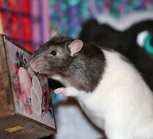 Do you keep treats in here? No? Why not? by Keala