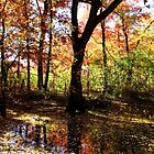 Autumn Rainbow Colors in Reflection by Jimmy Ostgard