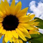 Sunflower Against The Sky by AussieDigital