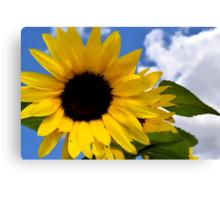 Sunflower Against The Sky Canvas Print