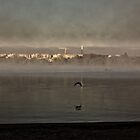 Spring Sun Rise at Lake Burley Griffin (Canberra/ACT/Australia) (6) by Wolf Sverak