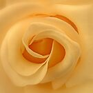Yellow Rose by AnnDixon
