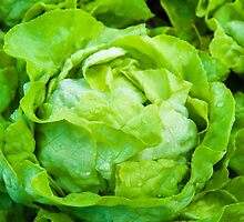 Closeup on fresh wet lettuce in the garden by Stanciuc